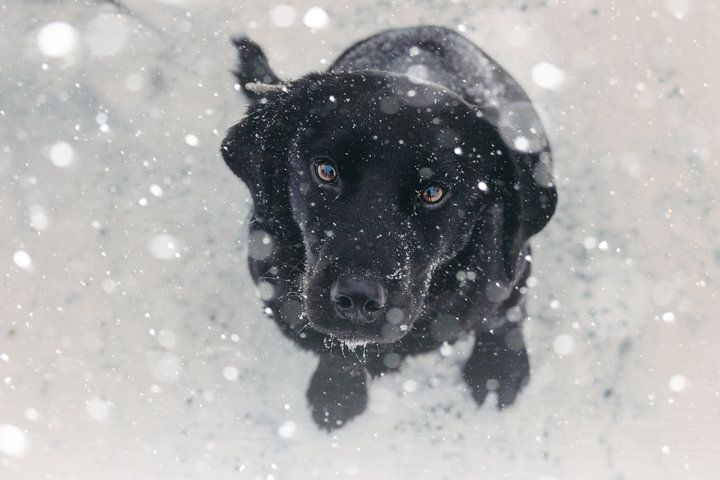 Here is How To Keep Dogs Safe In The Cold