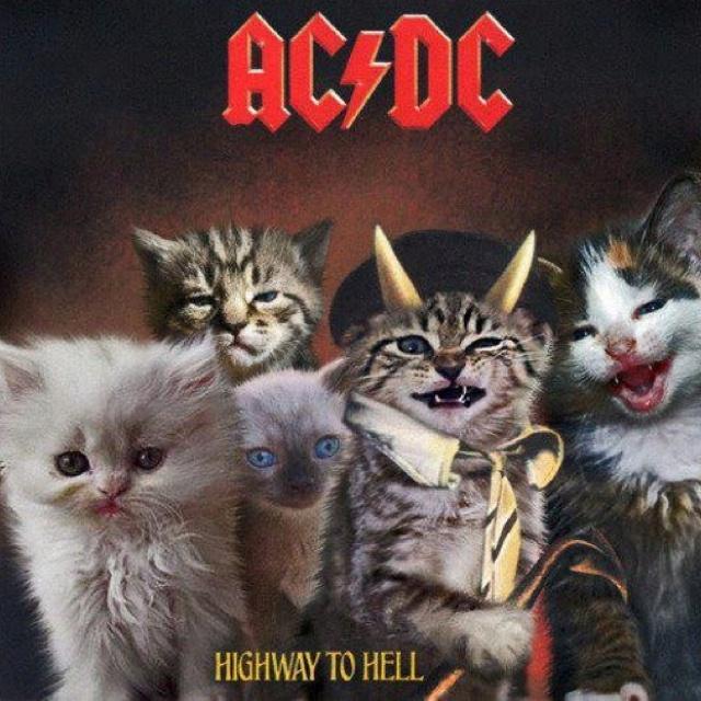 Una combinacion perfecta: gatos y AC/DC