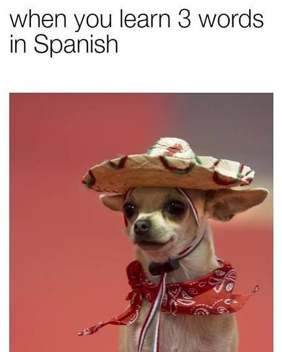 When You Learn 3 Words In Spanish Funny Relatable Memes Funny Dog Memes Dog Memes