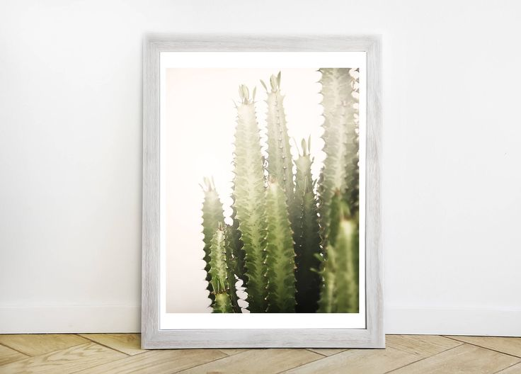 Sun Kissed Cactus Vertical Color Photograph - Southern California Modern Fine Art Print - Original Southwestern Cactus Picture by ShopRachaels on Etsy https://www.etsy.com/listing/543026116/sun-kissed-cactus-vertical-color