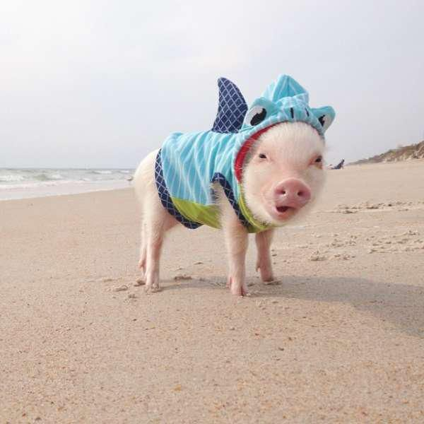 10. Un cochon rose à la plage déguisé en requin et un autre prêt pour l
