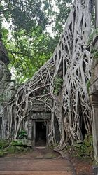 Catalog Manager | Shutterstock Mystery In the jungle - Picture of Ta Prohm. Famous Tree Scene from Lara Croft Tomb Raider Temple