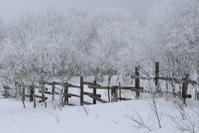 Deborahs Journey: Manitoba Spring Hoarfrost, rail fence in hoarfrost