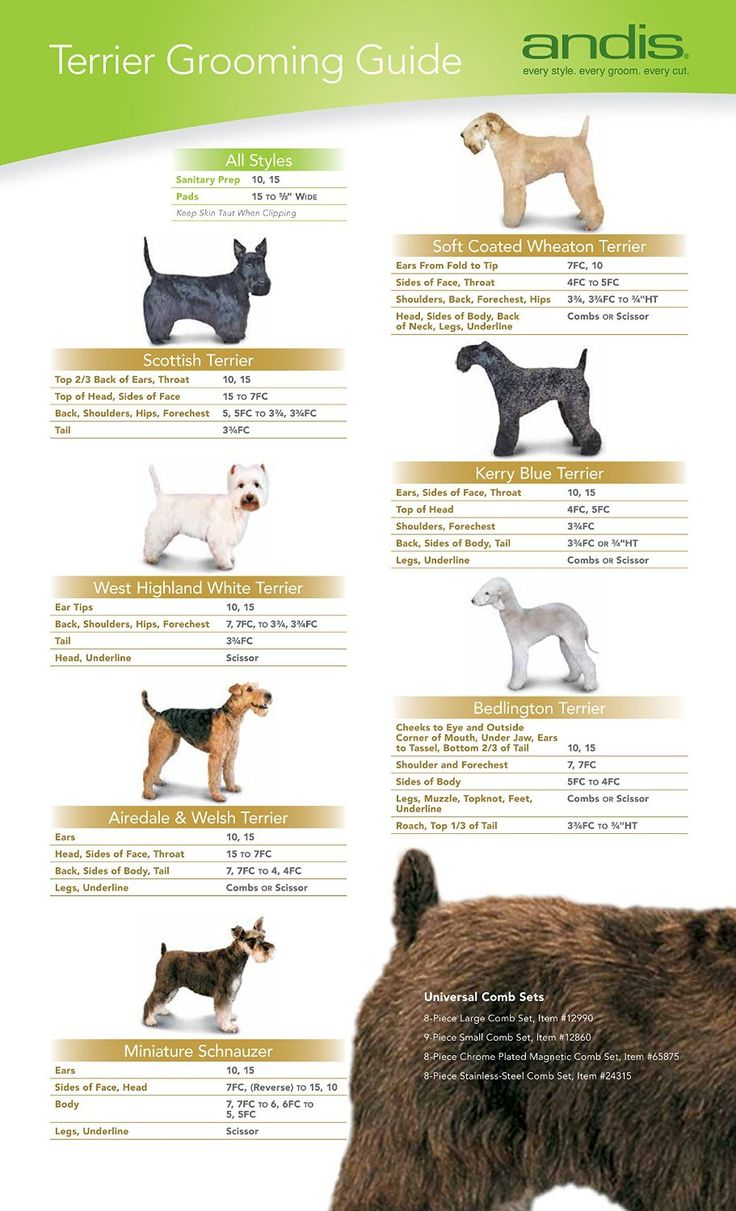 158 best dog grooming images on pinterest dog grooming business these blades due to their durability and precise engineering mean they give the best performace to pet professionals can be used to clip longer pet styles solutioingenieria Choice Image