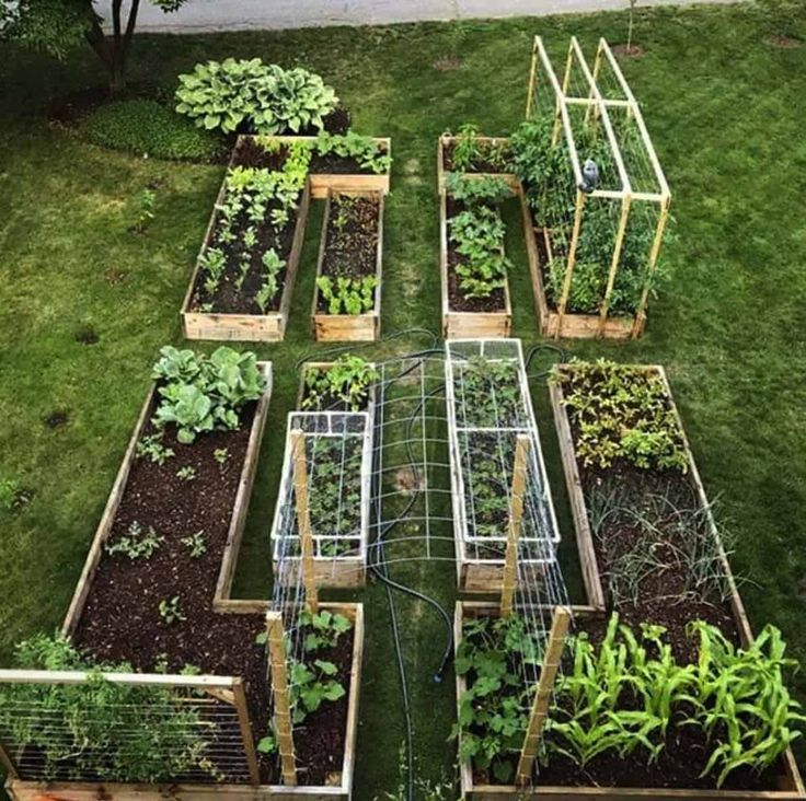 30 amazing ideas for growing a vegetable garden in your