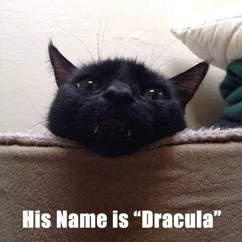 Doge Naming For Cats