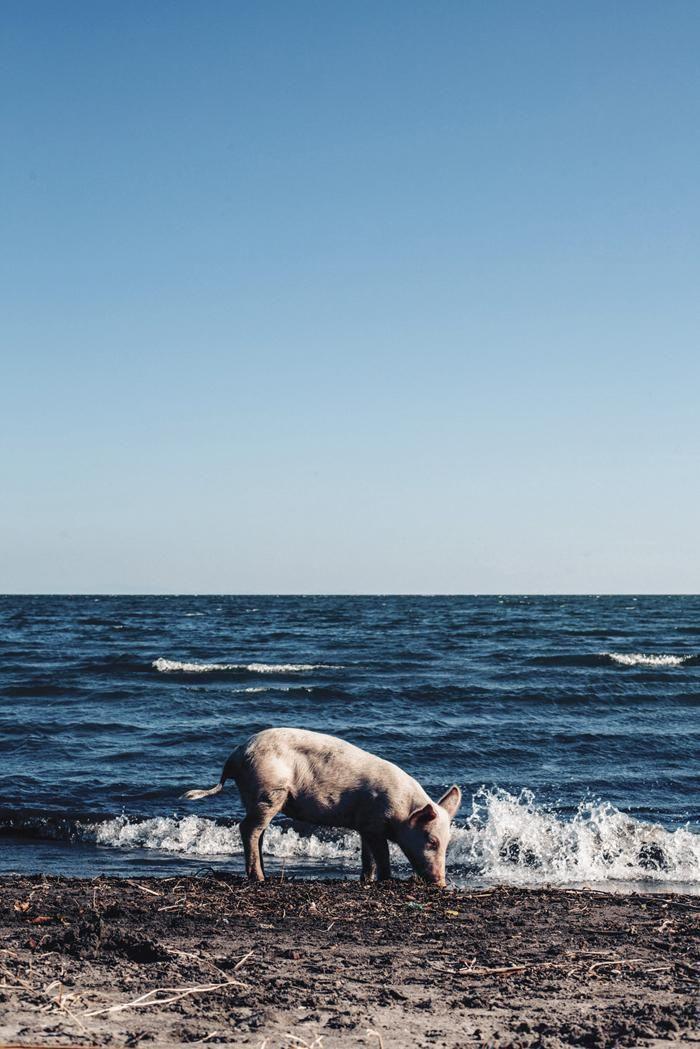 """Zobacz zdjęcia z prawdziwej """"Niebiańskiej plaży"""""""