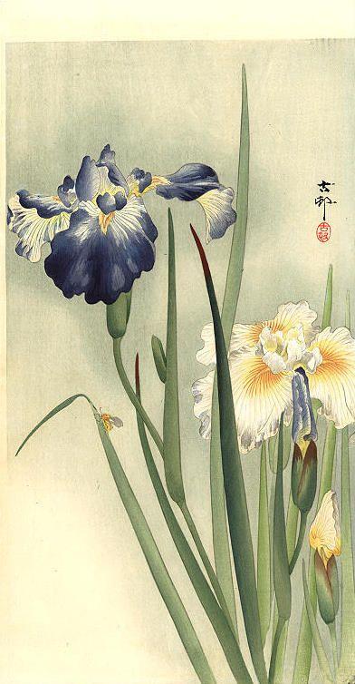 Koson, Ohara (1877-1947) Petit insecte sur les fleurs d'iris