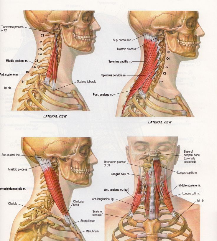 The 16 best TMJ and Bioesthetic Dentistry images on Pinterest ...