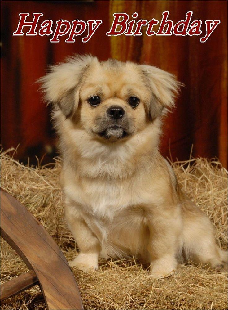 Tibetan Spaniel Dog Design A6 Textured Birthday Card