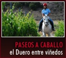 Paseos a caballo por la Ribera del Duero en Bodegas Comenge, cursos de cata, venta de vinos #rutavinoribera