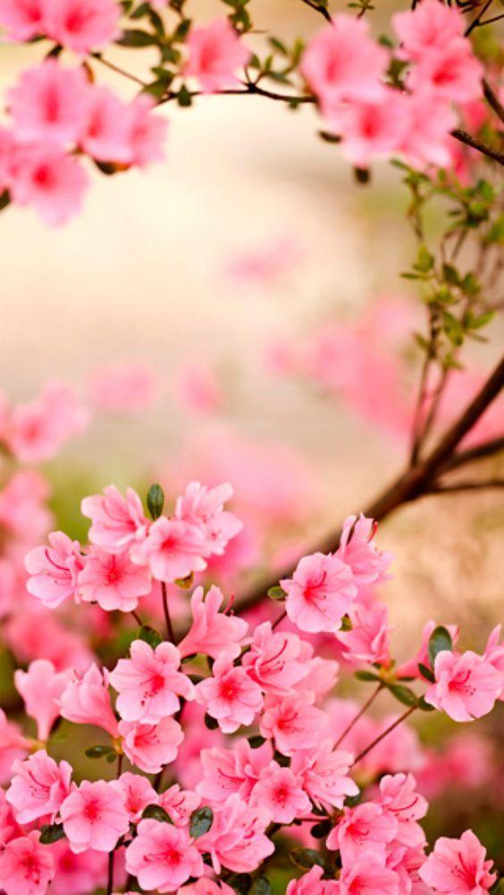 Gül # Blumen # Blumen # Rose # Rose ▓⃢⃢⃢⃢▓