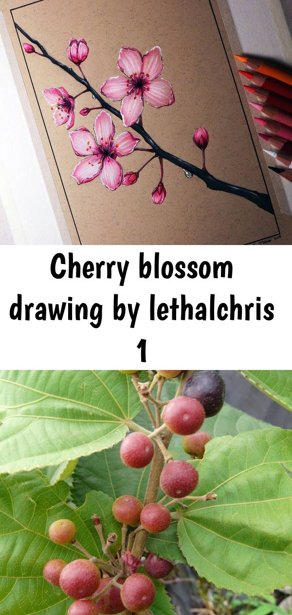 Cherry Blossom Drawing By Lethalchris 1 Cherry Blossom Drawing Cherry Blossom Blossom