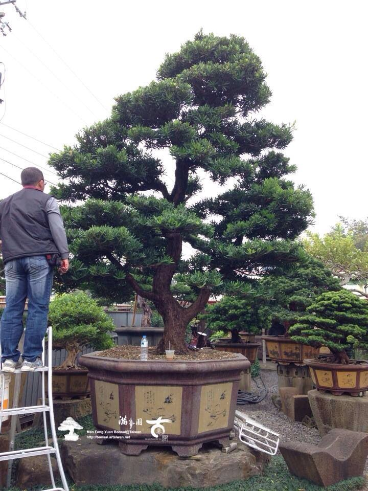 1730 b sta bilderna om bonsai the art of miniature trees - What does it mean to be a master gardener ...