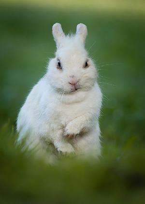 https://i.pinimg.com/736x/da/18/03/da18035d5dbcc9fb77e6c370b40918be--a-bunny-baby-bunnies.jpg