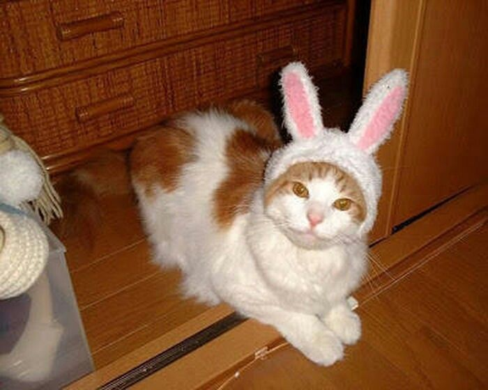 Happy Easter cat ! Cat memes - kitty cat humor funny joke gato chat captions feline laugh photo