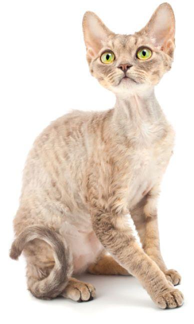 skinny kitten
