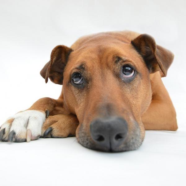 Remedios Caseros Para El Dolor De Estómago En Perros Efectivos Remedios Caseros Para Perros Cancer En Perros Entrenamiento Perros
