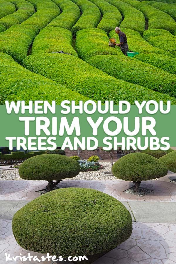 Best Time To Trim Trees When Should You Trim Your Trees And