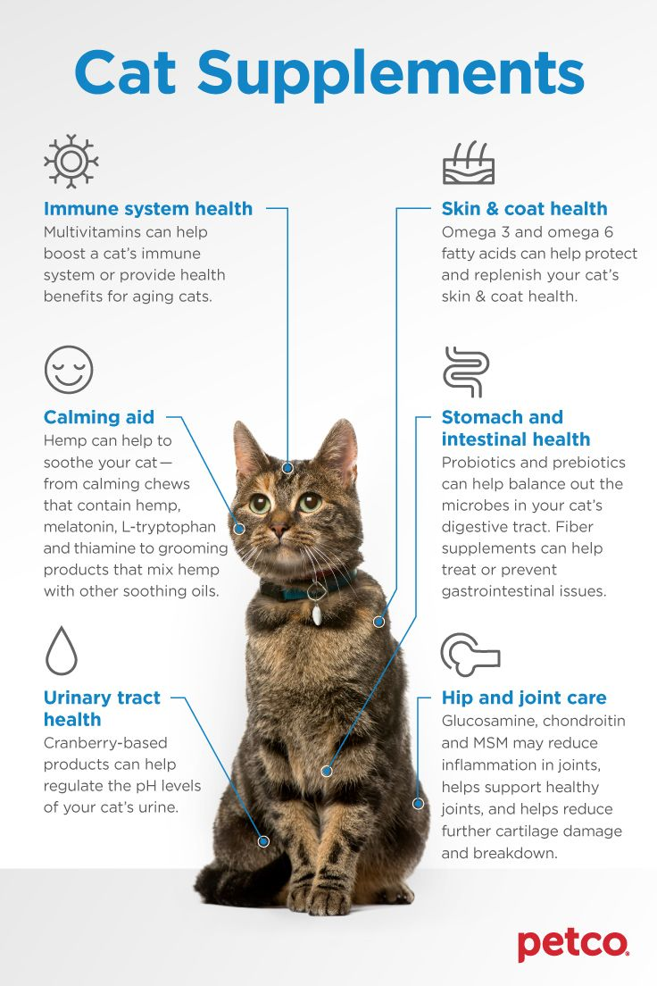Supplements For Your Cat Cat Supplements Cats Animal Nutrition