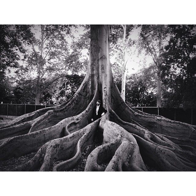 """Playing MB stage @womadelaide 20.00 hundred hrs nr this tree! #americaninterior"""