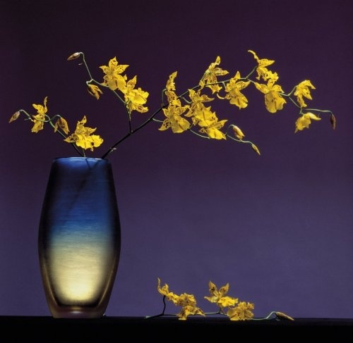 Flowers in a Vase 1985 by Robert Mapplethorpe. Such beauty!