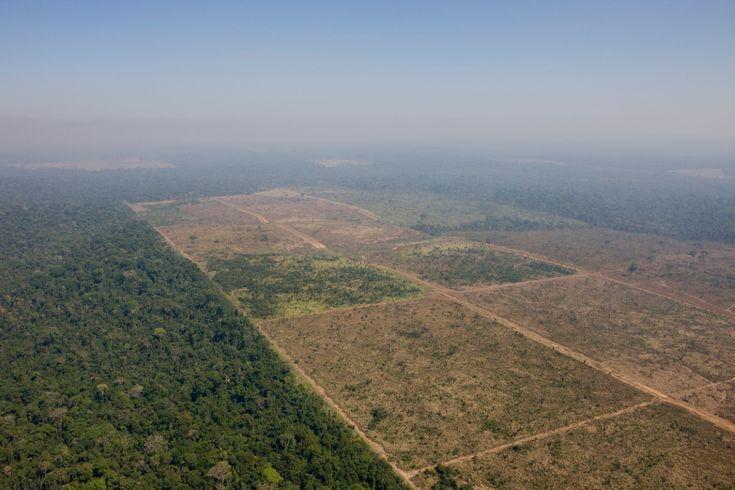 | Parlamentares podem até extinguir a Floresta Nacional de Jamanxim | Área desmatada para produção agropecuária dentro da Floresta Nacional de Jamanxim. Foto: Daniel Beltrá/Greenpeace.