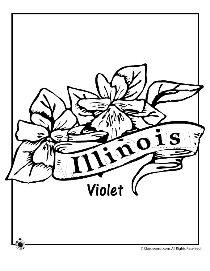 State Flower Coloring Pages Illinois Page Clroom Jr