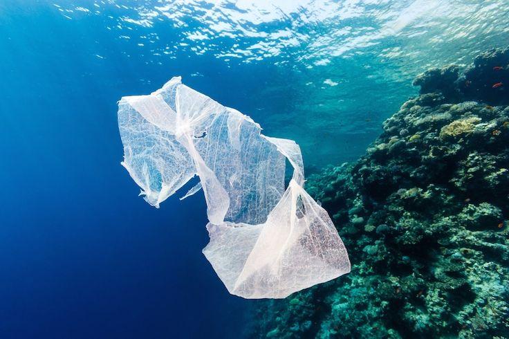 La imagen de una bolsa de plástico dando volteretas por la playa hasta que una ráfaga de viento la llevaalocéano es un escenario que se repiteen los 192 países costeros conbotellas vacía...