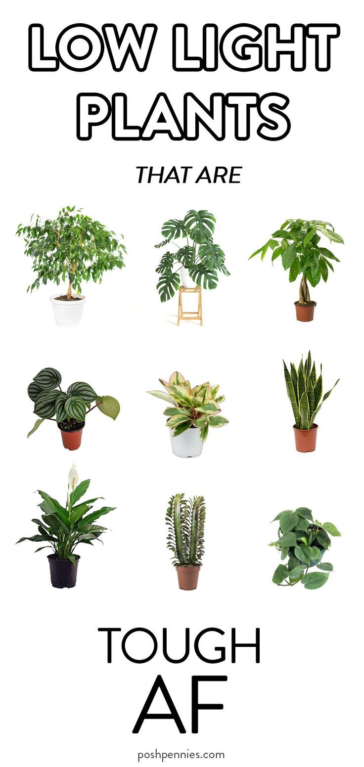 9 Actual Low Light Plants No Really Posh Pennies In 2020 Indoor Plants Low Light Wall Plants Indoor Indoor Tree Plants