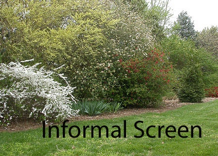 17 best images about privacy screen on pinterest shade for Natural outdoor privacy screens