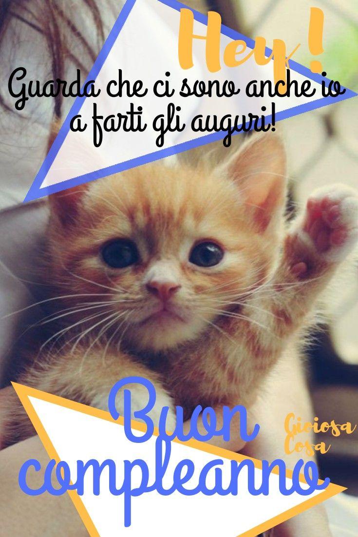Buon Compleanno Amici Gattini Cuccioli Dolci Teneri Auguri Felicita