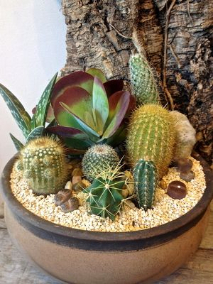 Succulent & Cactus Container Cactus in the front and Succulents in the back