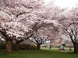 Queen Elizabeth Park  ,Vancouver