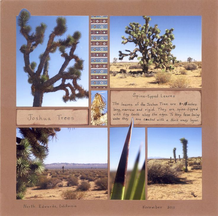Desert (Joshua Tree) layout