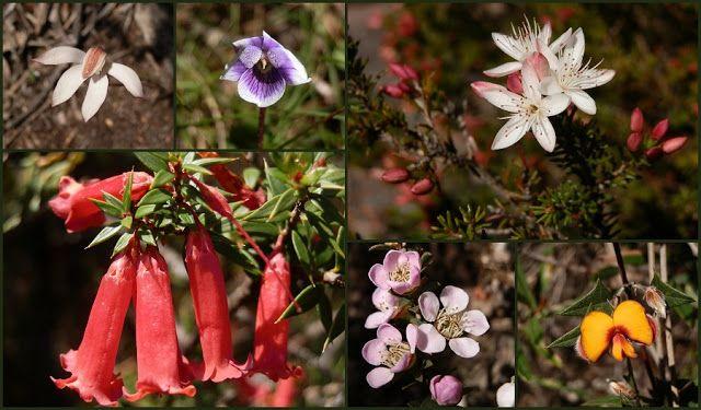 #Wildflowers en route to the Mt Abrupt summit, #Grampians, #Victoria, #Australia