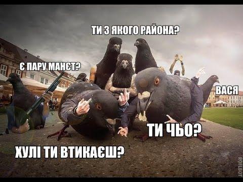 ЛУЧШИЕ ПРИКОЛЫ 2014 Выпуск 8 смешное видео, прикольное видео