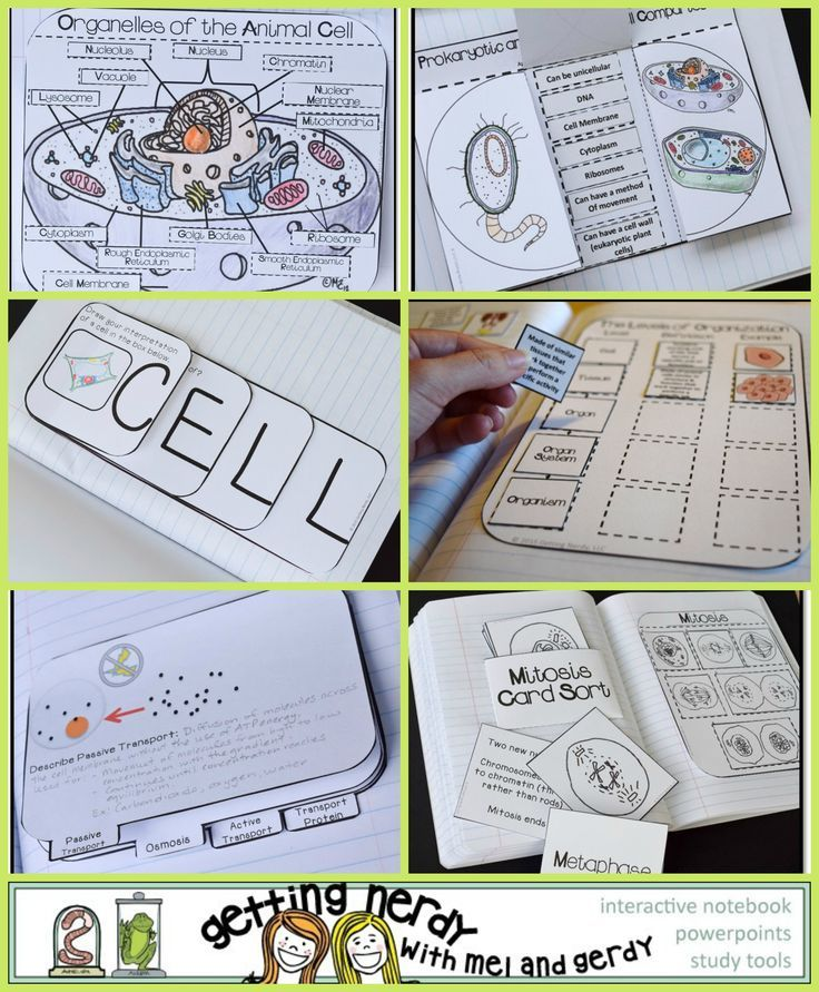 Over 30 Interactive Notebook activities for teaching cell organelles and processes in science.