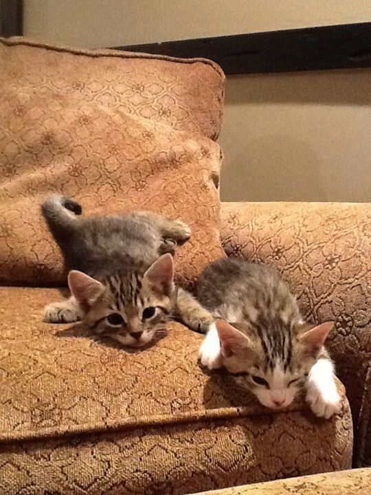 """""""All cats love a cushioned couch."""" --Theocrites ✮✮""""Feel free to share on Pinterest"""" ♥ღ www.CATSANDME.COM"""