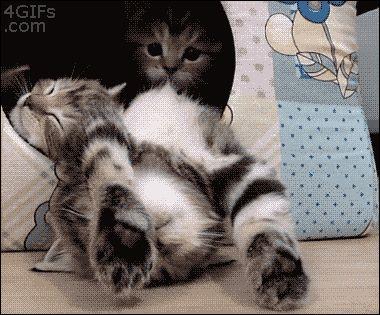 Sleepy siblings - Imgur