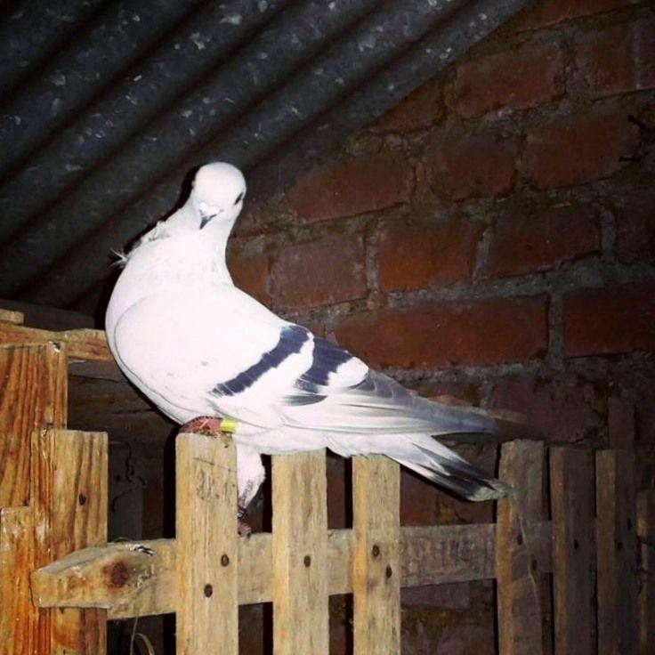 Le premier habitant de l'ancien pigeonnier