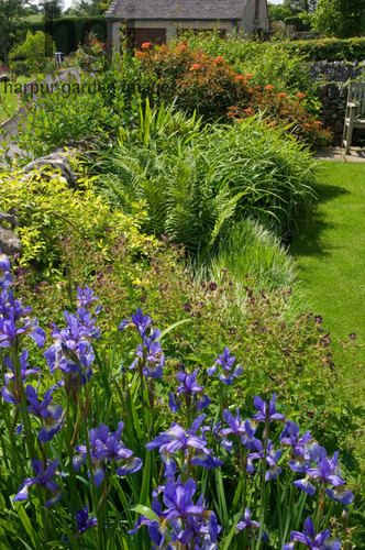 Harpur Garden Images Ltd :: slater67 Summer border of blue Iris purple Geranium Fern Euphorbia Dixter beside lawn backed by dry stone boundary wall Design: David Stevens for Kevin Slater, Creamery Cottage, Parwich, Derbyshire, UK Jerry Harpur Summer, border, blue, Iris, purple, Geranium, Fern, Euphorbia, Dixter , lawn, backed, dry, stone, boundary, wall, Creamery Cottage, Parwich, Derbyshire,, UK, Jerry Harpur,