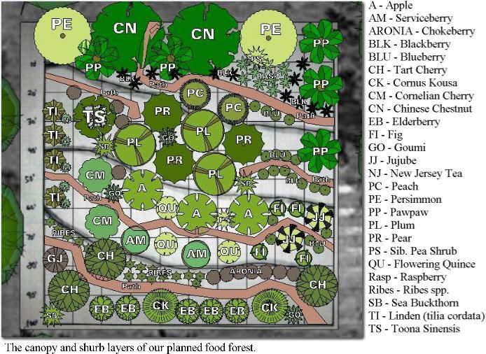 Backyard Forest Design :  kawpermacultureorgwpcontentuploads201101DesignVer2Captionjpg