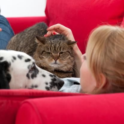 54 percent of cats and 55 percent of dogs in the U.S. are overweight or obese, putting them at risk for more serious problems such as diabetes