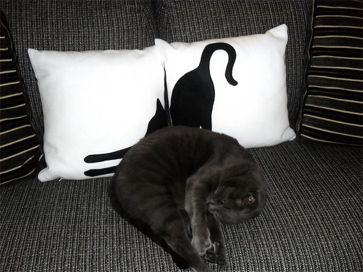 Black cats and white pillow #ItsTimeToDream #satisfiedcustomer