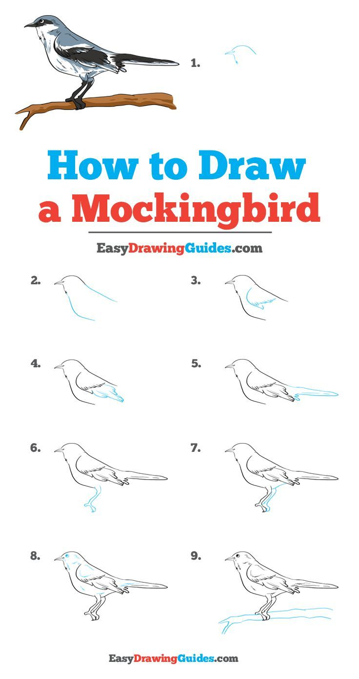 How To Draw A Mockingbird Really Easy Drawing Tutorial In 2020 Drawing Tutorial Easy Drawing Tutorial Easy Drawings