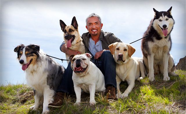 """Cesar is a best-selling author, public speaker, and internationally acclaimed star of the TV shows """"Dog Whisperer with Cesar Millan,"""" """"Leader of the Pack"""" and the new hit """"Cesar 911,"""" making him the pet care industry's most recognized and sought-after authority working in the field of dog behavior and rehabilitation. Cesar personally teaches the Fundamentals of Dog Behavior and Training I program."""