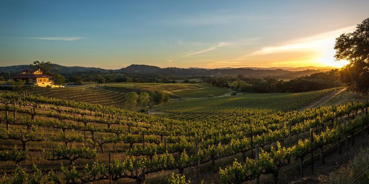 Hanna Winery and Vineyards Weddings | Get Prices for Napa/Sonoma Wedding Venues in Santa Rosa, CA