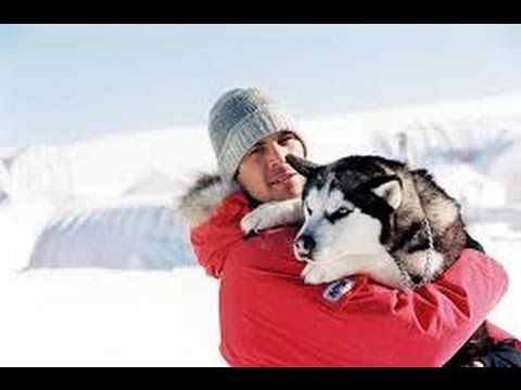 62 best images about Eight Below on Pinterest | The movie, Paul ...