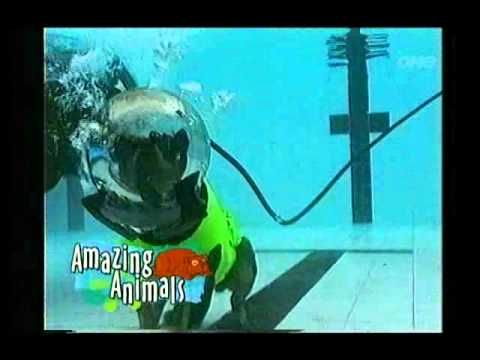 Harry's Practice Amazing animals - Scuba diving dog - YouTube